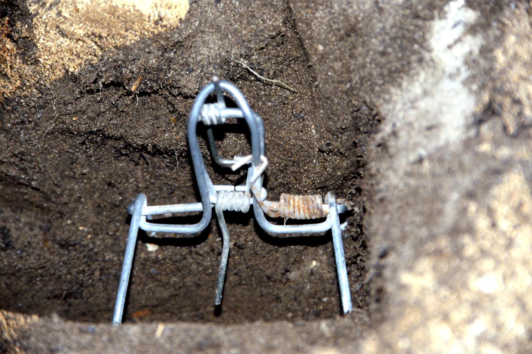 Tunnelbauer im Garten nicht willkommen - Teil 2 | Industrieverband Agrar