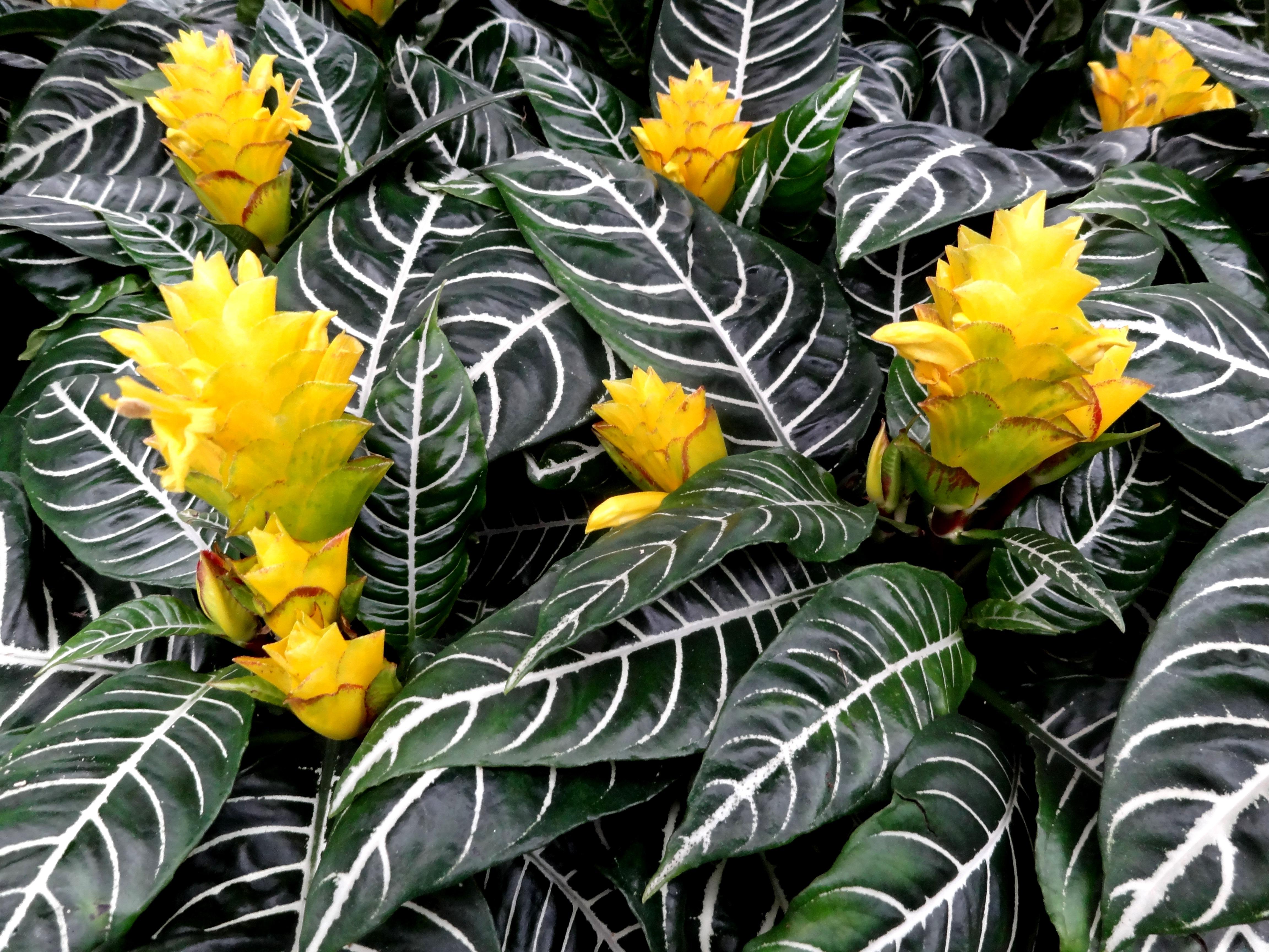 zimmerpflanze aus urgro mutters zeiten industrieverband agrar. Black Bedroom Furniture Sets. Home Design Ideas