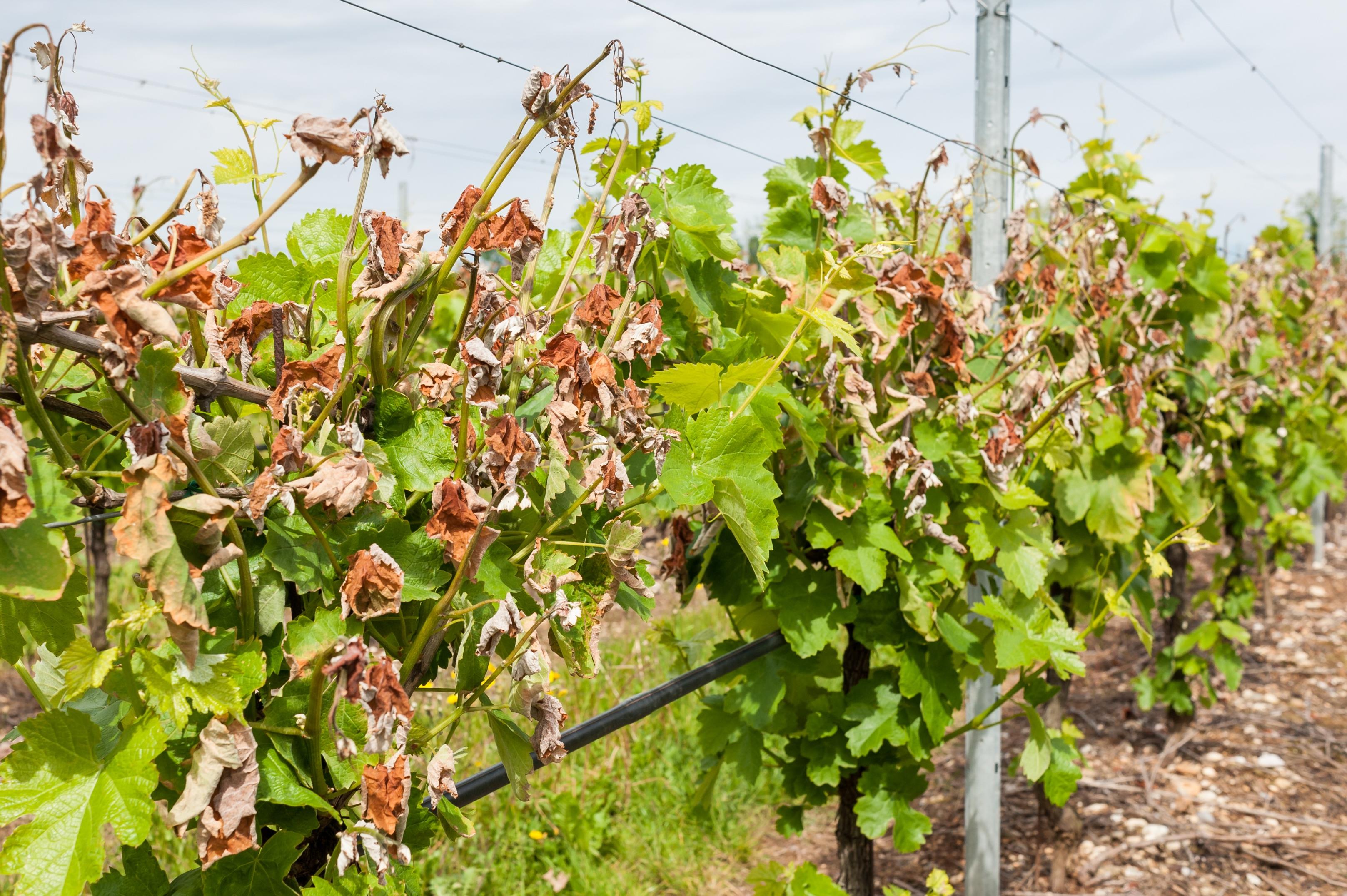 Eisheilige Datum kalte eisheilige im warmen mai industrieverband agrar