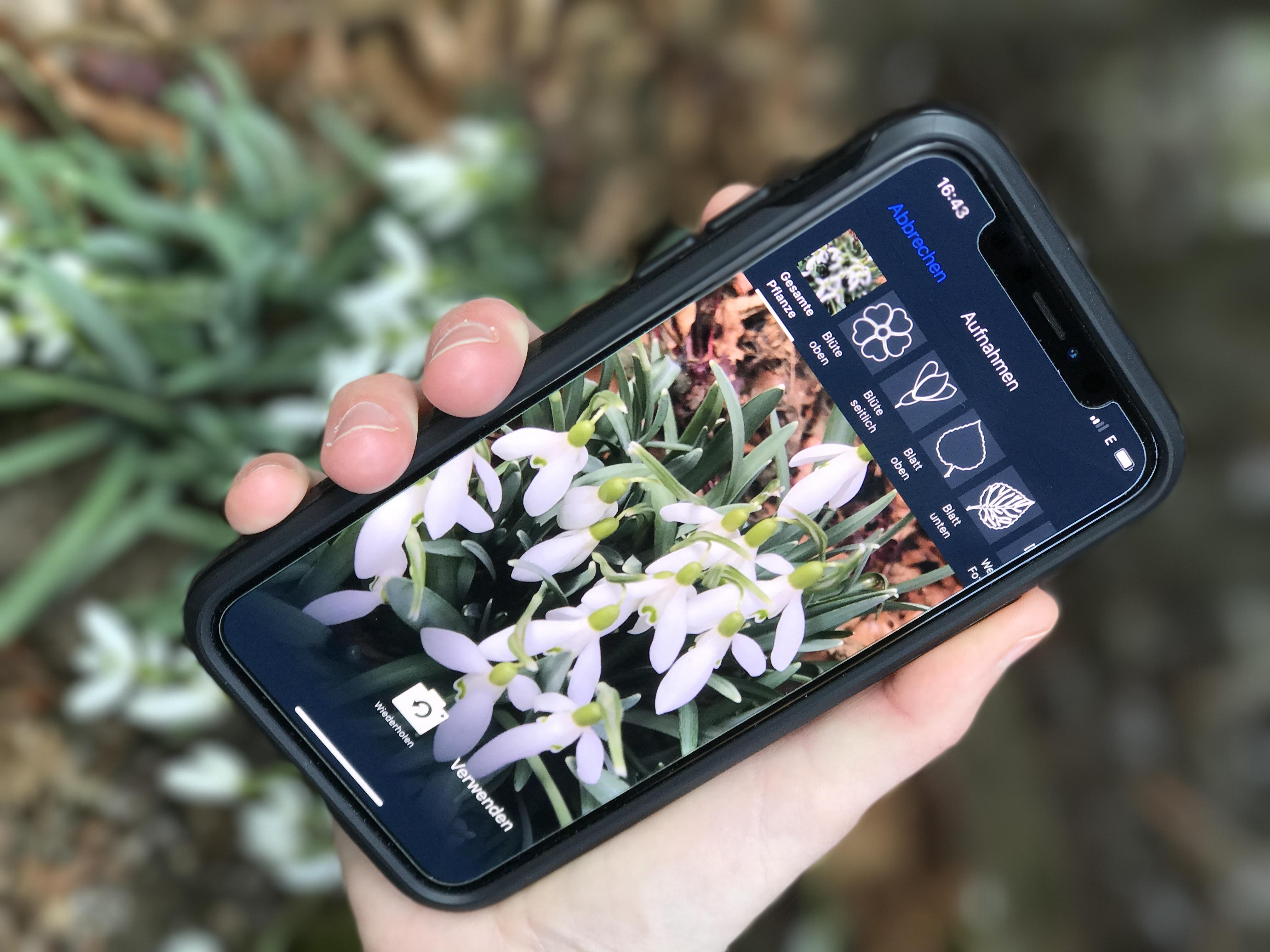 pflanzen mit dem smartphone bestimmen | industrieverband agrar