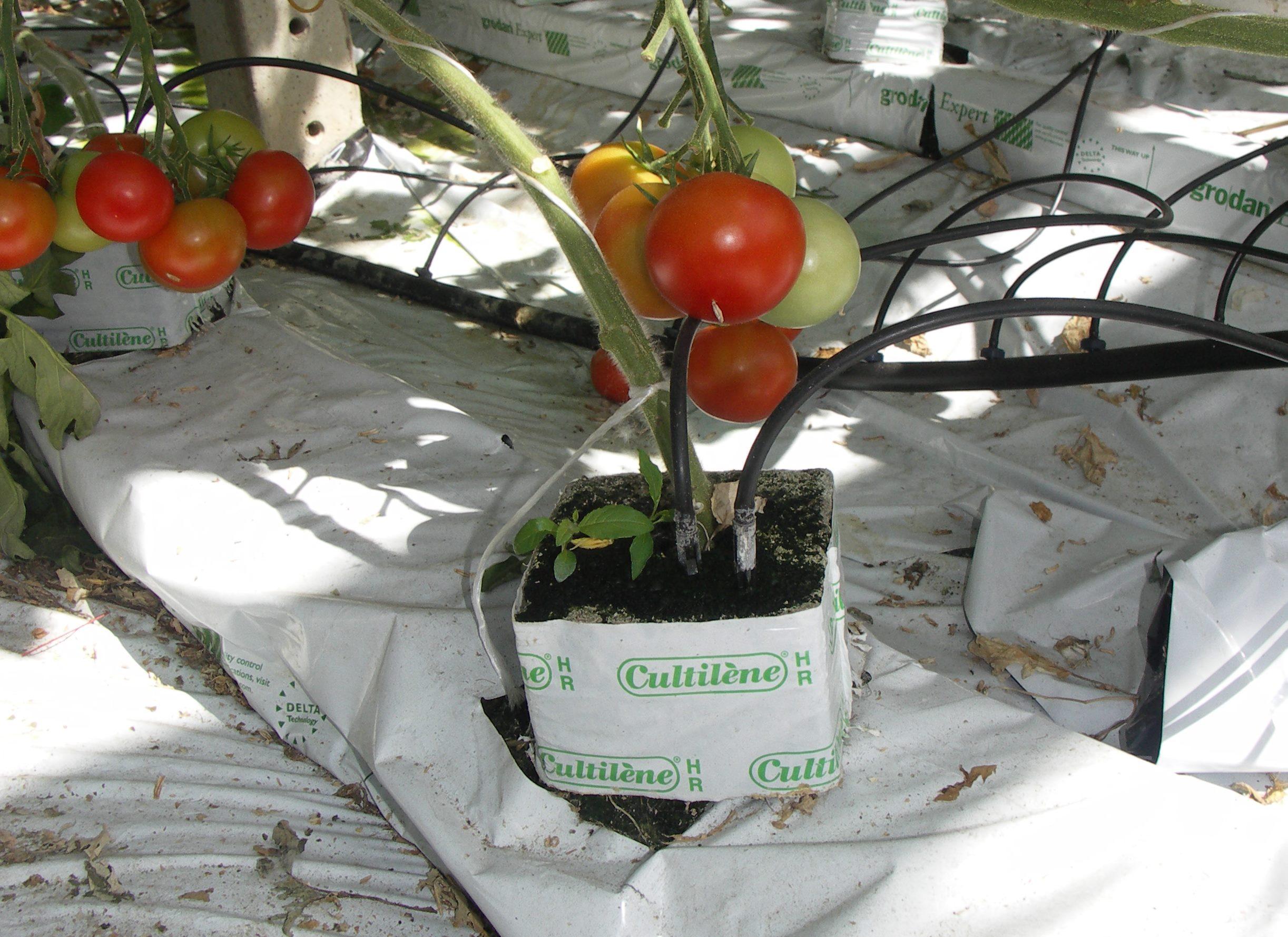 tomaten und gurken kommen ohne erde aus industrieverband. Black Bedroom Furniture Sets. Home Design Ideas