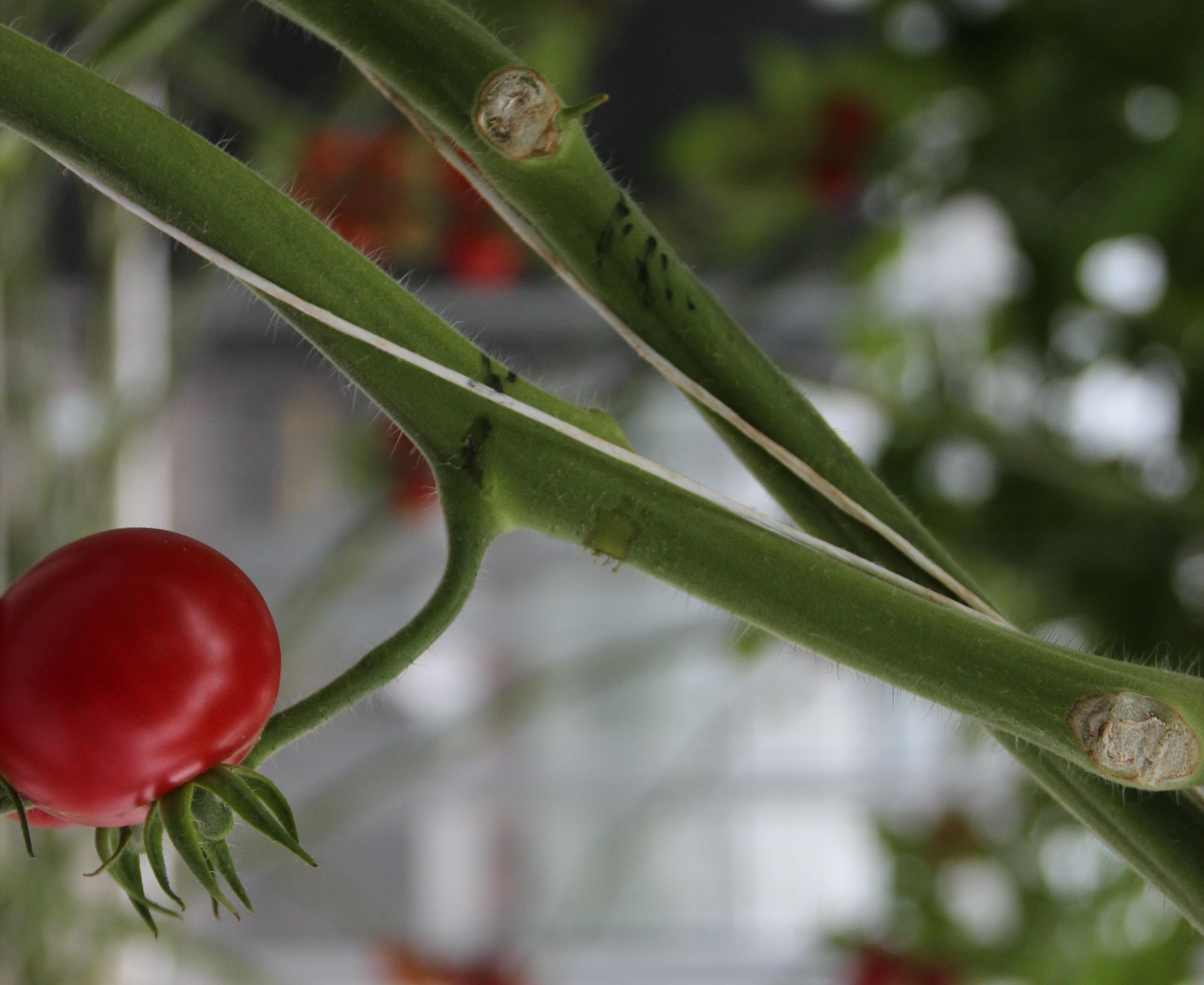 gezonde kas pflanzenschutz geht im gew chshaus neue wege industrieverband agrar. Black Bedroom Furniture Sets. Home Design Ideas