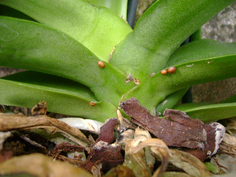orchideen im zimmer gesund erhalten industrieverband agrar. Black Bedroom Furniture Sets. Home Design Ideas