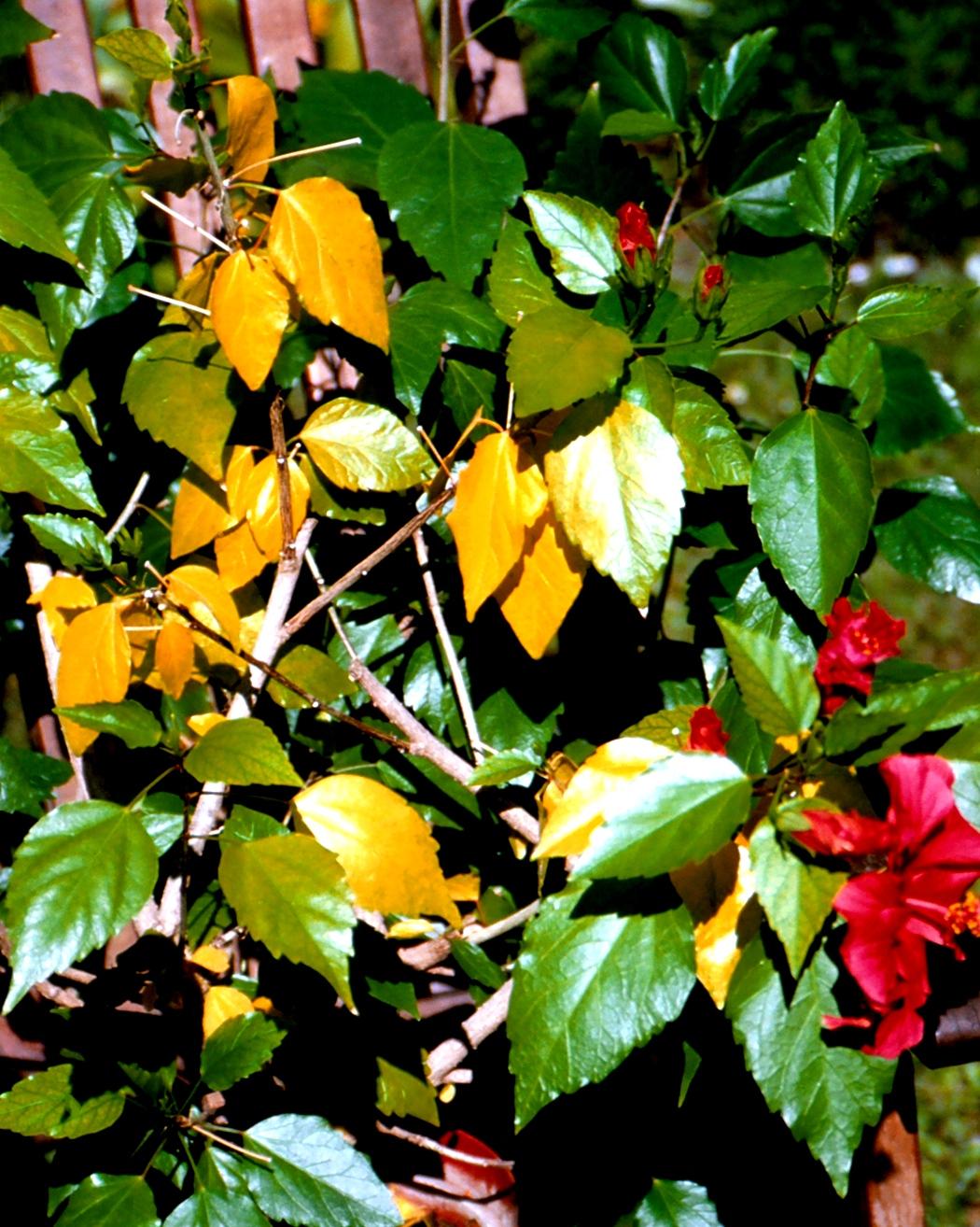 Anthurie Gelbe Blätter : was zimmerpflanzen krank macht industrieverband agrar ~ Lizthompson.info Haus und Dekorationen