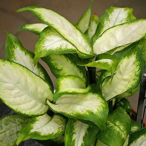 von natur aus giftig manche pflanzen nur mit abstand bewundern industrieverband agrar. Black Bedroom Furniture Sets. Home Design Ideas