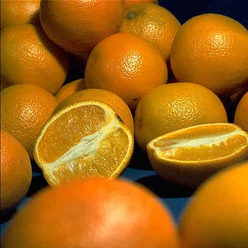 orangen woher sie kommen wie sie wachsen industrieverband agrar. Black Bedroom Furniture Sets. Home Design Ideas