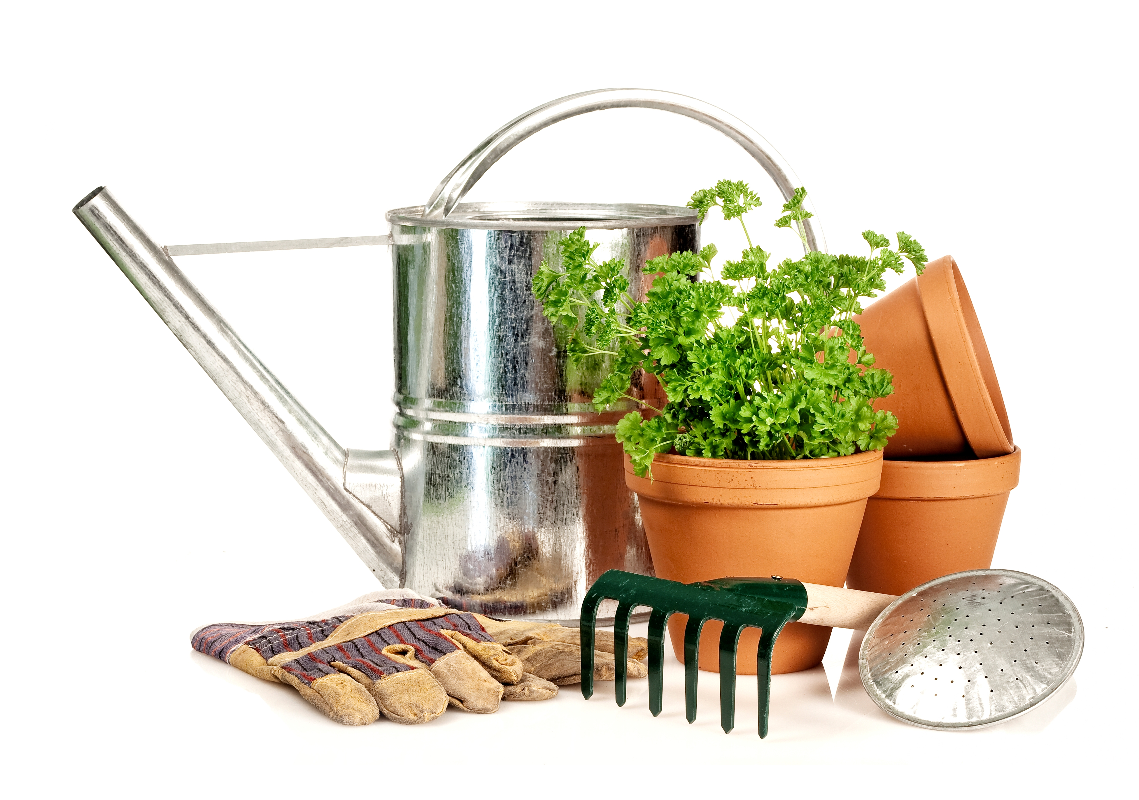 gesunde pflanzen in haus und garten industrieverband agrar. Black Bedroom Furniture Sets. Home Design Ideas