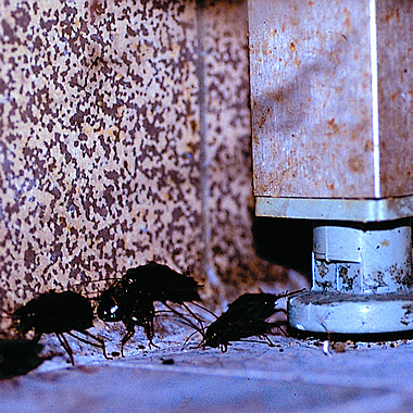 wir leben mit kakerlaken industrieverband agrar. Black Bedroom Furniture Sets. Home Design Ideas
