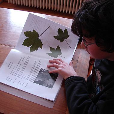 Herbarium Blätter nur gesunde blätter für s herbarium industrieverband agrar