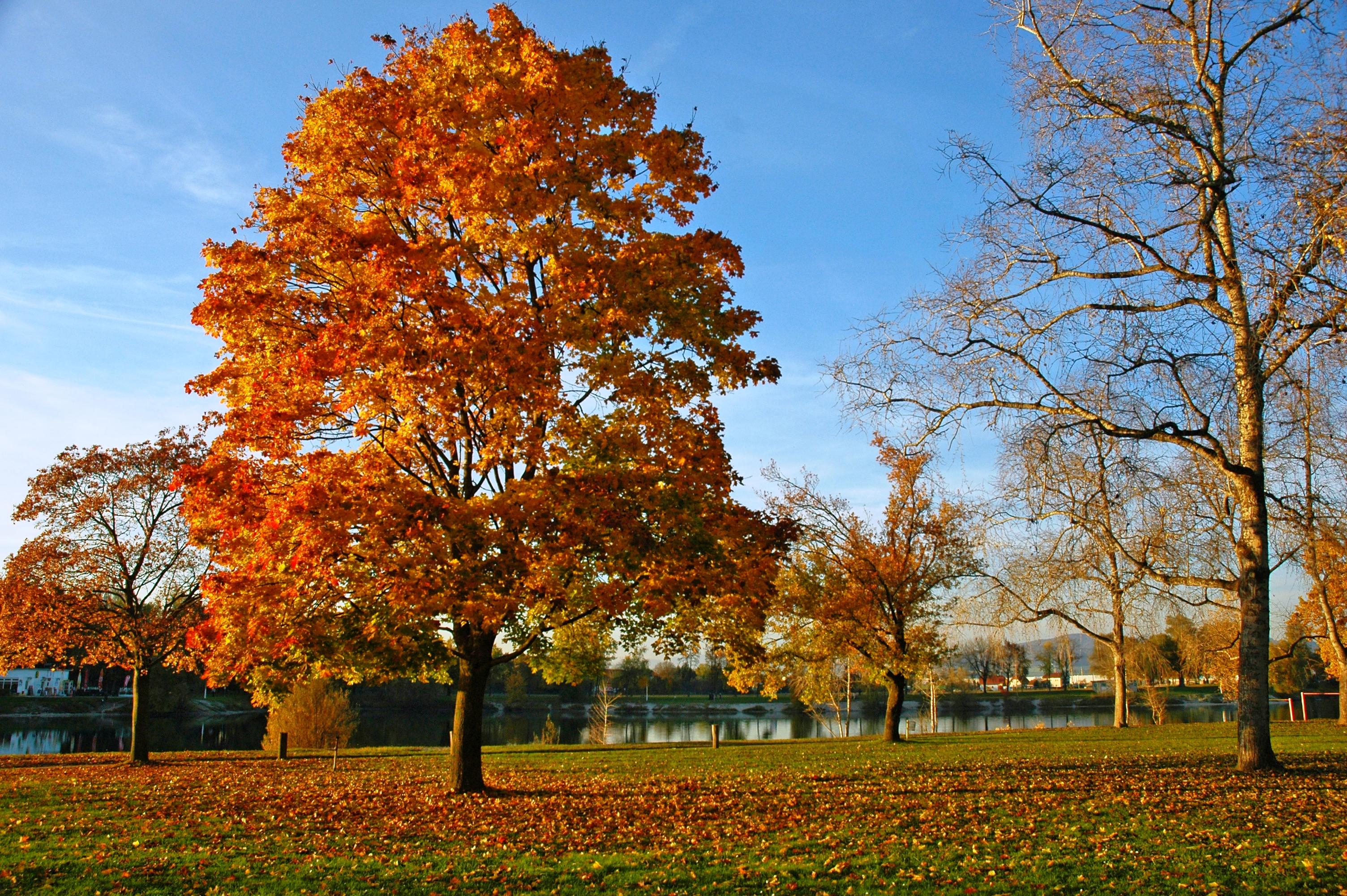 Wer malt im Herbst die Blätter bunt? | Industrieverband Agrar