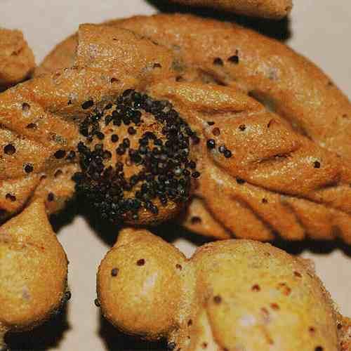 Der Brotkäfer Nicht Nur Ein Allesfressender Vorratsschädling