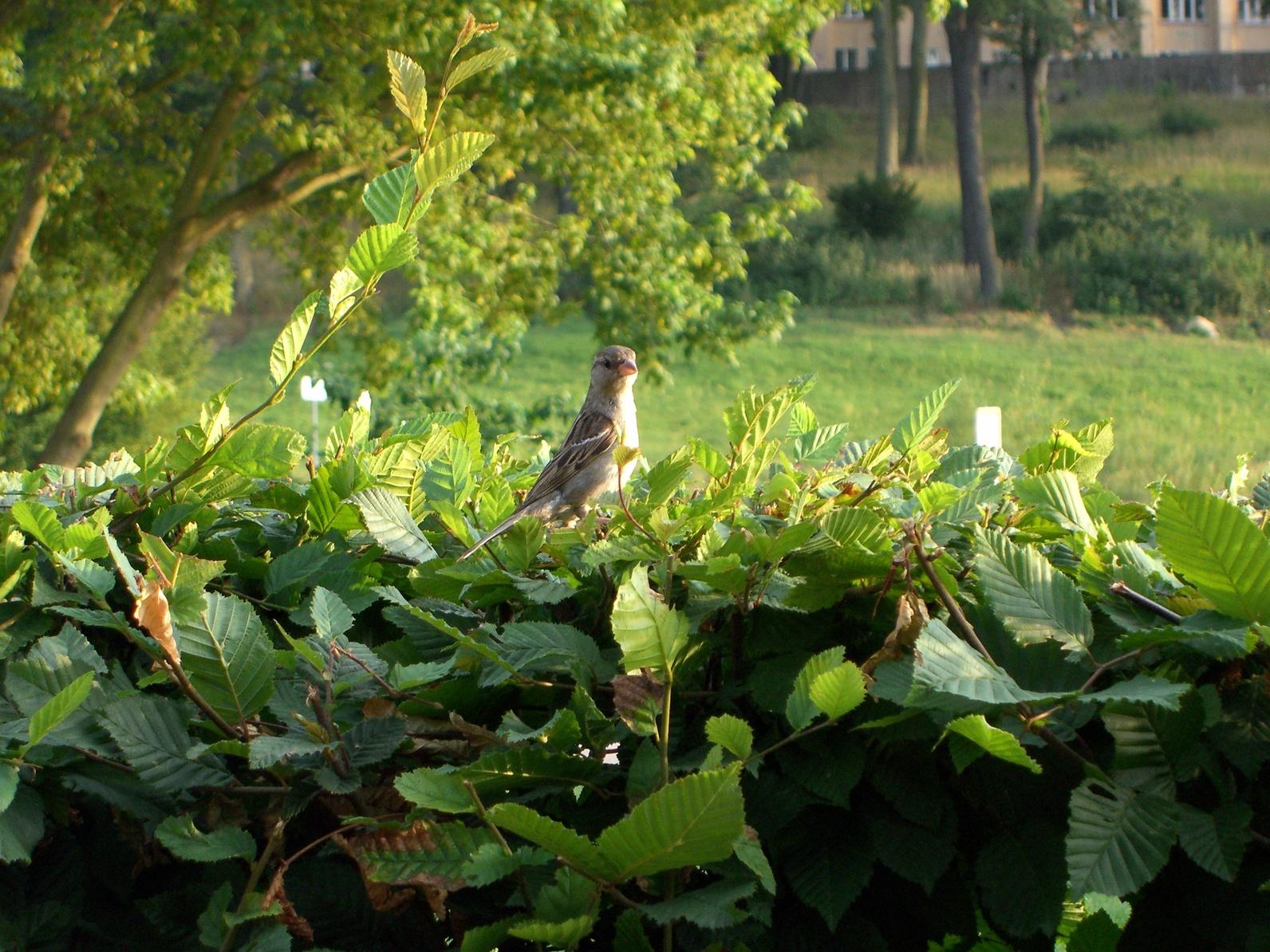 Hecken sind mehr als nur ein grüner Zaun