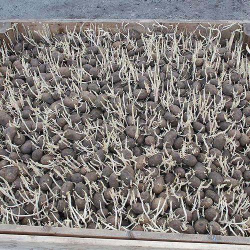 Fabelhaft Kartoffeln richtig lagern | Industrieverband Agrar #FP_12